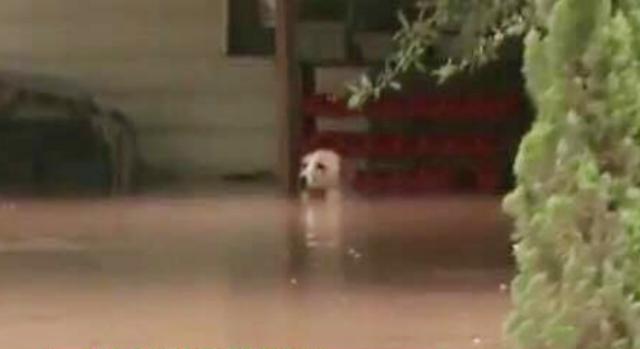 Cachorro foi resgatado momentos antes de morrer afogado