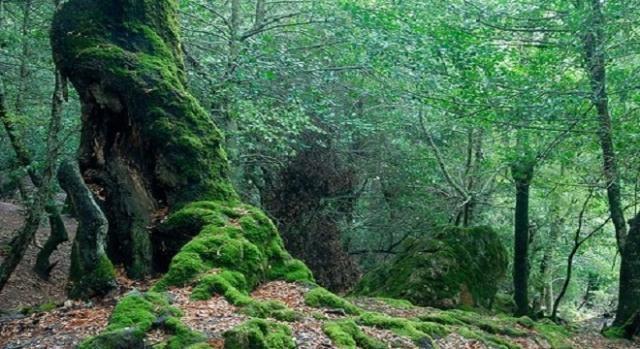 i boschi e le foreste diventano sempre più fitti.