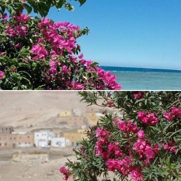 La Mer Rouge à Hurghada, le désert montagneux à Louxor.