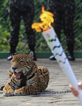 Juma era una hembra de jaguar amazónico