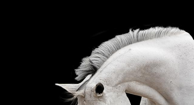 A horse's neck, ears, and mane are the focal points of this photo. / Photo via Bob Tabor, used with permission.