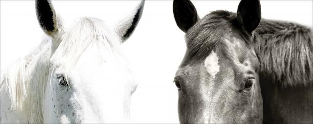 Black and white horses. / Photo via Bob Tabor, used with permission.
