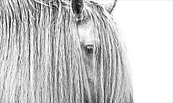 The long mane of a horse. / Photo via Bob Tabor, used with permission.