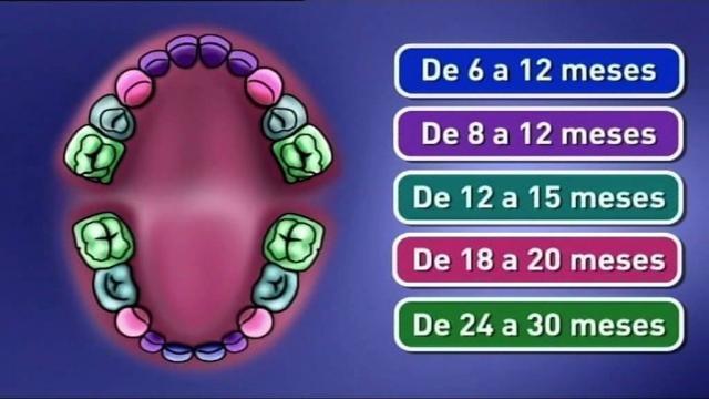 Saúde Infantil   Os primeiros dentes - YouTube - youtube.com
