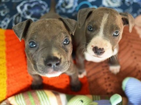 Abused puppies rescued from rail tracks - Times Union - timesunion.com