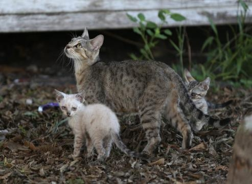 Feral cat questions still up in the air - caller.com