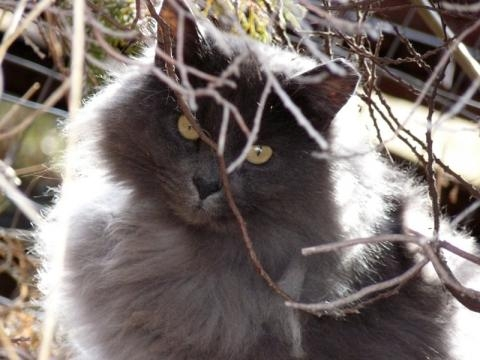 Feral Cats - SNIP - snipidaho.org