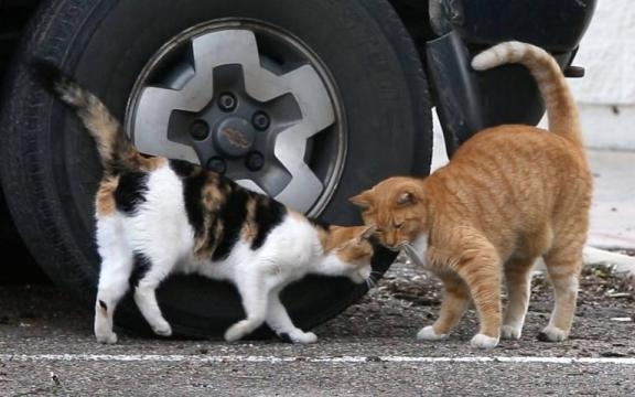 Gallery: Feral cats in Biloxi may be too smart for their own good ... - sunherald.com