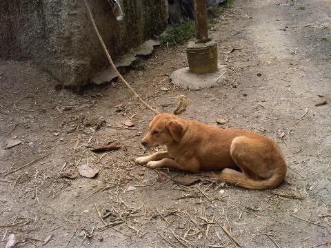 Los perros son abandonados en las puertas del refugio.