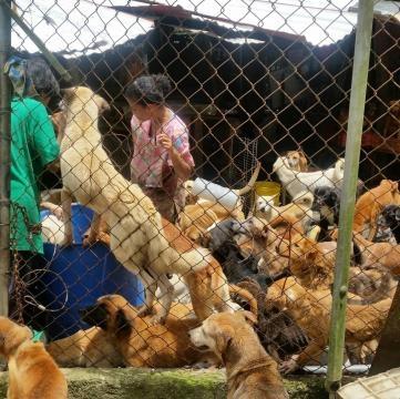Momento en el que los perros esperan su comida con ansias
