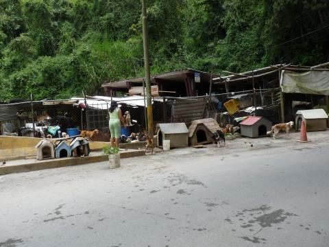 Refugio de FAMPROA donde albergan mas de 100 perros.