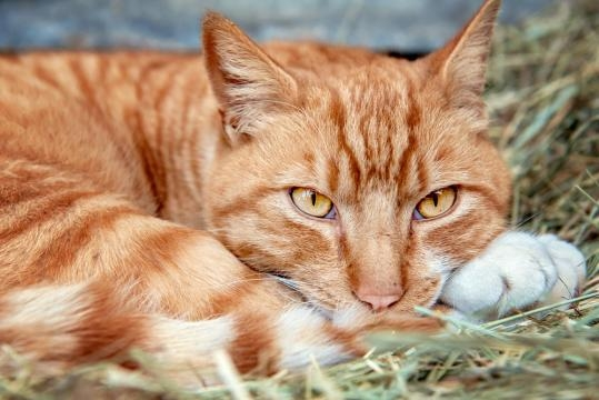 Tips on Convincing Feral Cats to Take Shelter | The Animal Rescue ... - theanimalrescuesite.com