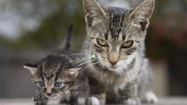 UTAS experts kick off crowdfunding campaign for new feral cat trap ... - com.au