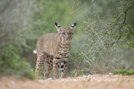 Trump's Wall Would Be Hell For Animals and wildlife, Too - thedodo.com