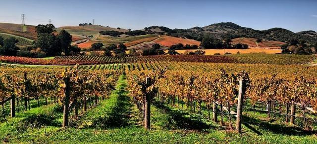 Vineyards in Napa Valley (Image credit – Brocken Inaglory – Wikimedia Commons)