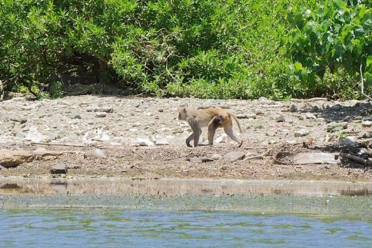 A Monkey on