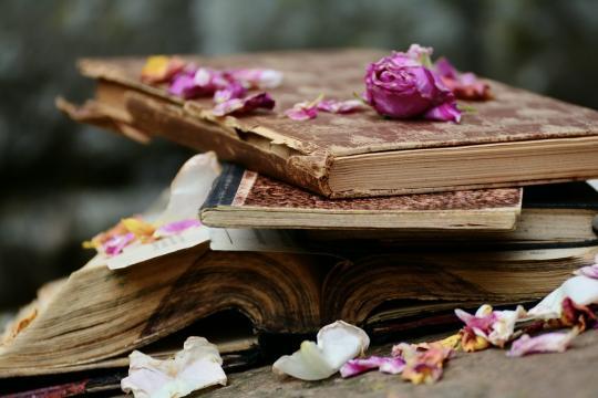 Beauty of Books (Photo via: pixabay.com)