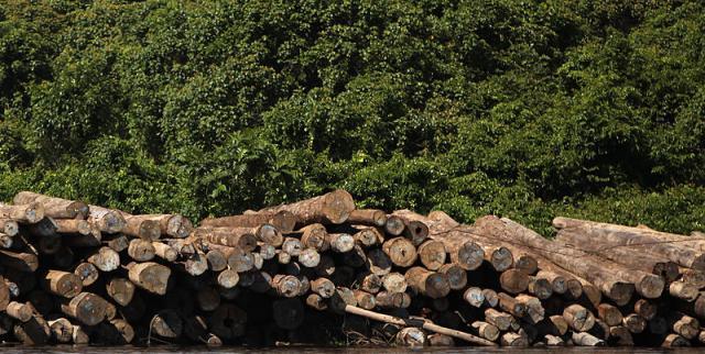 Evidence of deforestation (Image credit - Josh Estey/AusAID, Wikimedia Commons)