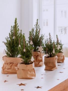 Os pinheiros aparecem acomodados em um pacote de papel kraft. Uma árvore de Natal bem charmosa e natural