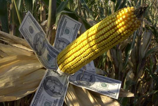 Guía para entender la problemática del maíz transgénico - pijamasurf.com
