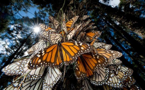 Santuarios naturales en México - foodandtravel.mx