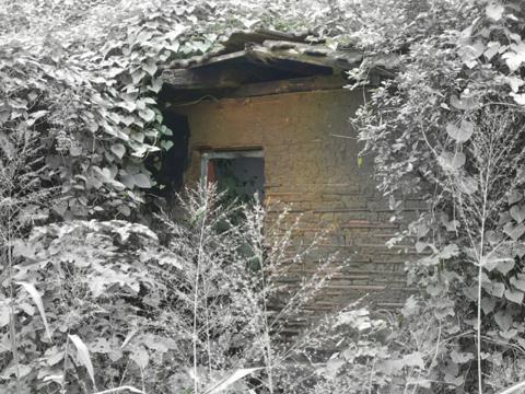 Abandoned || Engulfed - A deserted home