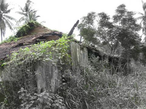 Breathing    Living - Over grown plants reclaim neglected structures