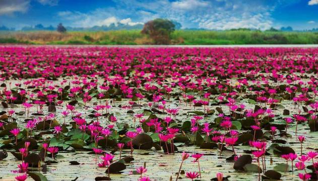 In Thailandia c'è un incredibile lago ricoperto di fiori di loto ... - siviaggia.it