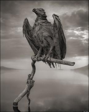 Ave em um galho seco,mumificada
