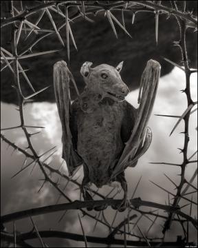 Morcego petrificado na margem do lago Natron