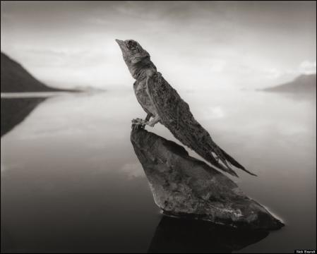 Pássaro petrificado no lago Natron