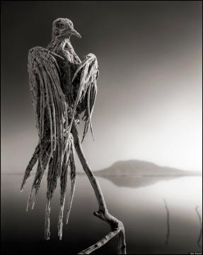 Pássaro petrificado pelo efeito das águas do lago