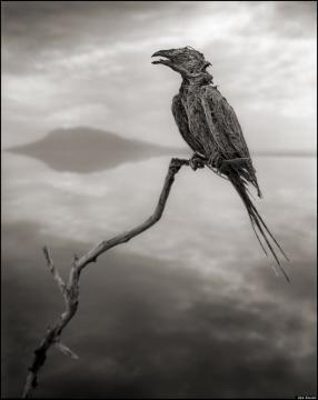 Pássaro sem vida, mas com ossos,penas e bico preservados como uma estátua