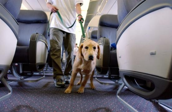 AirTalk®   Airlines plan new regulations for service animals in ... - scpr.org