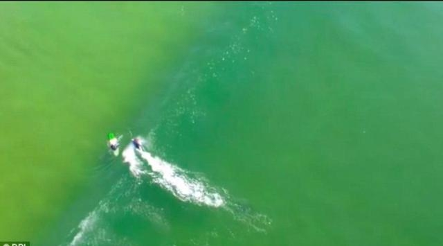 Great white shark swims off before touching surfer (via: dailymail.co.uk)