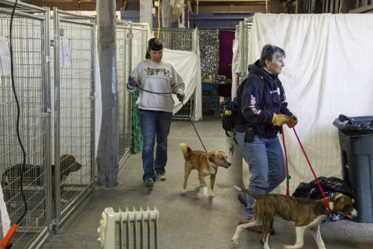Group works to reunite pets, owners after Tennessee fires | Times ... - timesfreepress.com