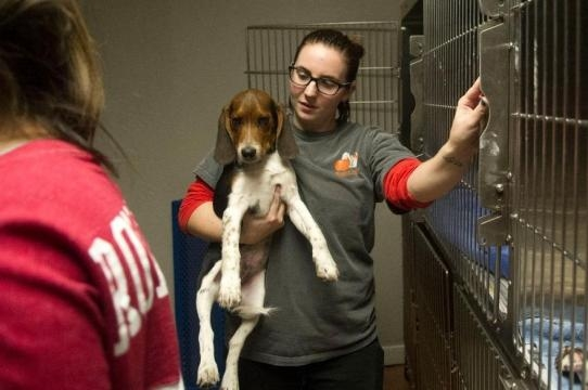 Humane Society takes in evacuated animals from Sevier County - knoxnews.com
