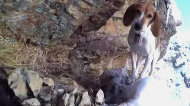 Dog stuck on cliff ledge in Provo, Utah - BBC News - bbc.com