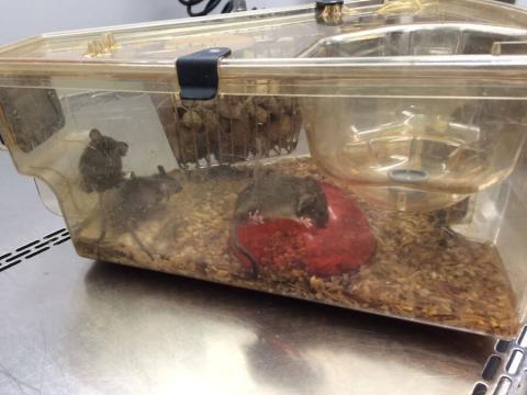 PETA Exposes Animal Cruelty at University of Pittsburgh Laboratories - peta.org