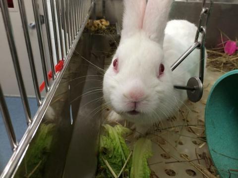 PETA Exposes Animal Cruelty crimes at University of Pittsburgh Laboratories - peta.org