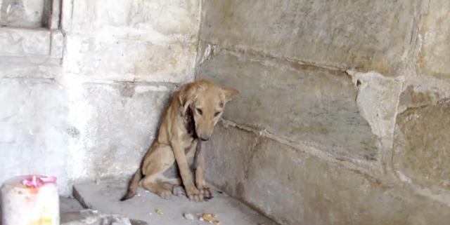 Puppy Rescued From Prayer Temple   RTM - RightThisMinute - rightthisminute.com