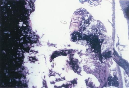 Bigfoot News January 21, 2014 - wordpress.com