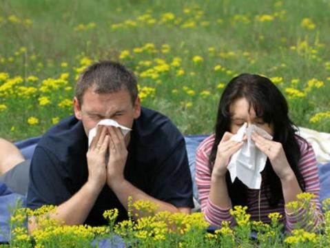 Para saber / Llega la primavera y llegan la alergias: algunos tips ... - com.ar