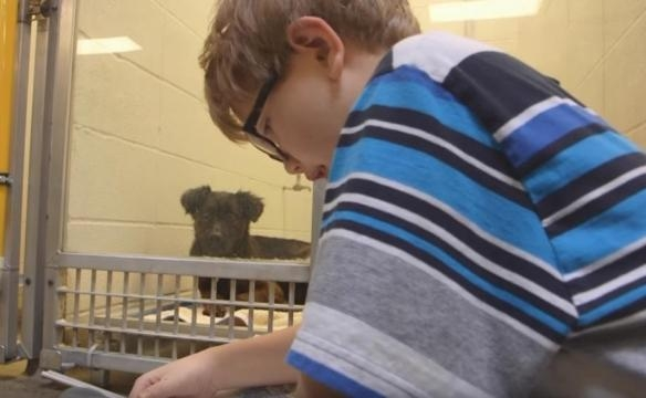 Children read books to shy abandoned dogs to get them out of their ... - ntd.tv