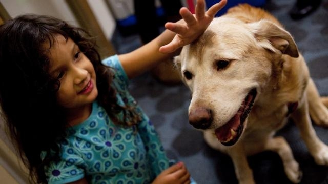 Pet Therapy: How Animals And Humans Heal Each Other : Shots ... - npr.org