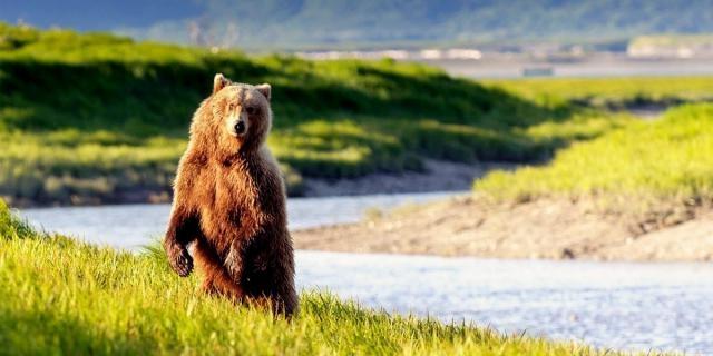 Senate Approves Legislation to Kill Wolves, Bears in Alaska ... - ecowatch.com