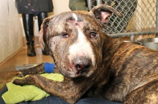 Severely abused dog succumbs to injuries | SFBay :: San Francisco ... - sfbay.ca