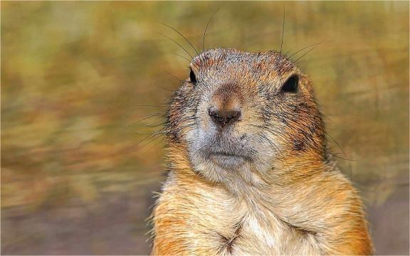 ecology Archives - Prairie Dog Pals - prairiedogpals.org
