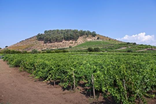 Benanti Vineyards, Etna Sicily Italy