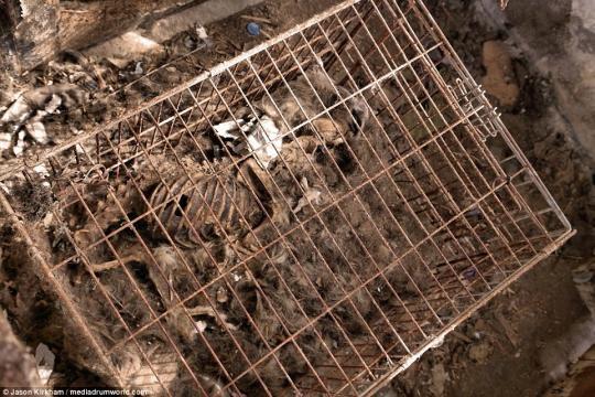 more than 20 dogs were found inside of hamptom home